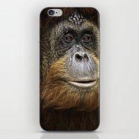 Orangutan Portrait iPhone & iPod Skin