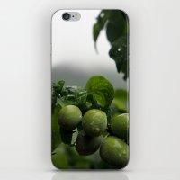 Plums iPhone & iPod Skin