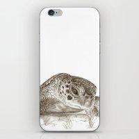 A Green Sea Turtle :: Earthtones iPhone & iPod Skin