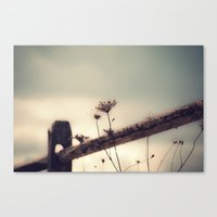 One More Day Canvas Print