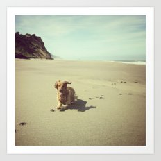 Dachshund on Beach, Humboldt County, CA Art Print