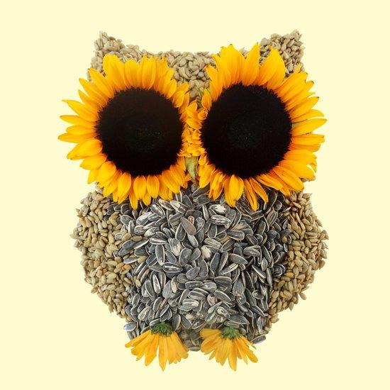 Hoot! Day Owl! Canvas Print