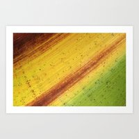 Tropical Textures #3 Art Print