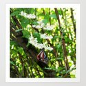 Japanese Butterfly Art Print