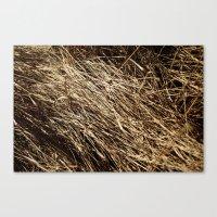 Dry Grass Rhythms Canvas Print