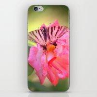 Old Scarce Swallowtail B… iPhone & iPod Skin