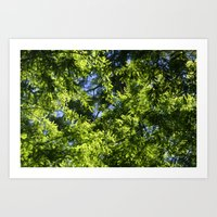 In The Shade Of The Cypr… Art Print