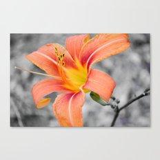flower in grey Canvas Print