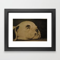 Puppy on the floor boards (Bull terrier) Framed Art Print