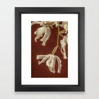 Orchid Framed Art Print