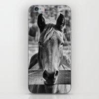 Waiting (Black and White Horse #1)  iPhone & iPod Skin
