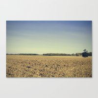 Lonely Field in Blue Canvas Print