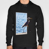 Blue Heron Strutting Out… Hoody