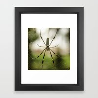 Autumn Spider Framed Art Print