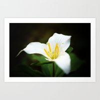 Flower Photography Trill… Art Print
