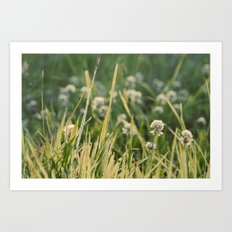 Dusk in the Field Art Print