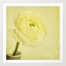 buttery buttercup Art Print