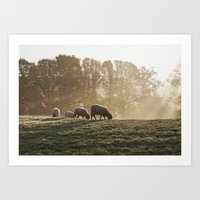 Sheep In Fog At Sunrise.… Art Print