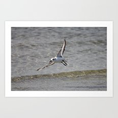 Seagull in Flight Art Print