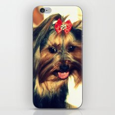 D's Yorkie puppy iPhone & iPod Skin