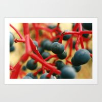 Wild Berries of the Don Art Print