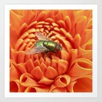 Little Fly Macro XIV Art Print