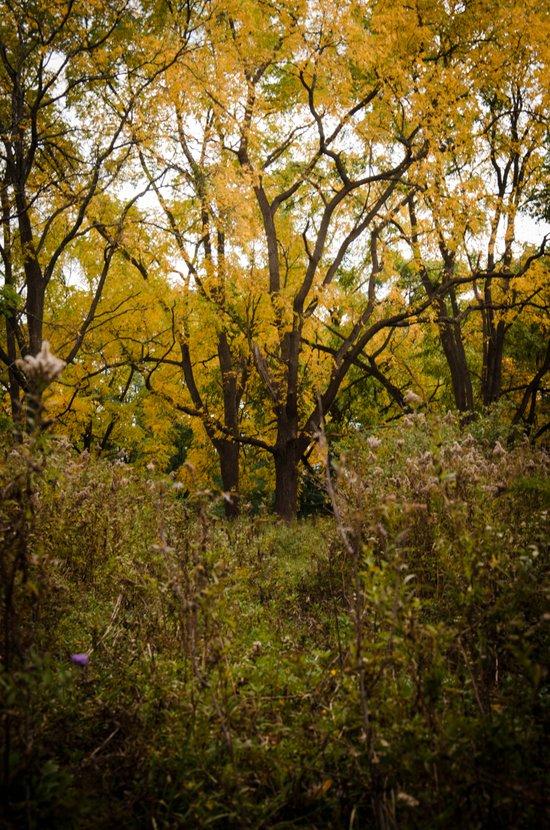 Walk Through Fall Canvas Print