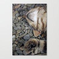 Ecstatic Cat Canvas Print