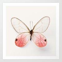 Pink Glasswing Art Print