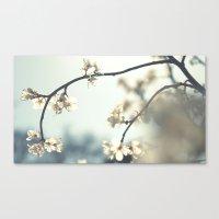 spring break in bloom . . . Canvas Print