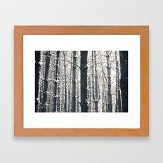 Snowy Pine Grove Framed Art Print