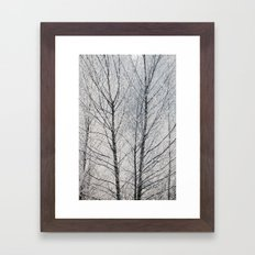 Young trees covered in a thick white frost. Norfolk, UK. Framed Art Print