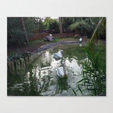 Oasis Pelican Canvas Print