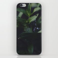 Summer Dew V.01 iPhone & iPod Skin