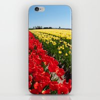 Tulips - Netherlands iPhone & iPod Skin