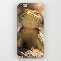 Curious Critter iPhone & iPod Skin