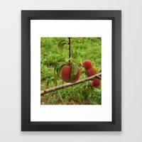 Hanging Peach Framed Art Print