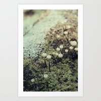 Toadstool Forest Art Print