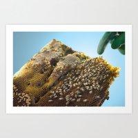 caribbean bees Art Print