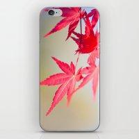 Spring Maple Tree 1012 iPhone & iPod Skin