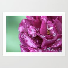 Flower with rain drops Art Print