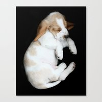 Basset Hound Puppy Canvas Print