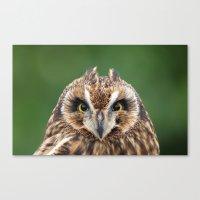 Boreal Owl Canvas Print
