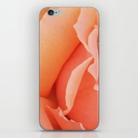 Painted Rose Petal iPhone & iPod Skin