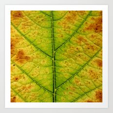 autumn leaf macro Art Print