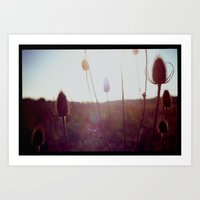 Evening Light In The Fie… Art Print