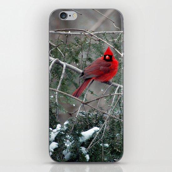 Winter Cardinal iPhone & iPod Skin