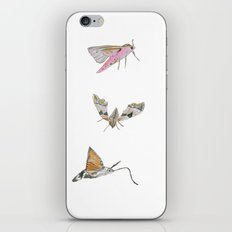 Biro and coloured pencil illustration of hawkmoths iPhone & iPod Skin