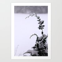 Winter Greens - Snow Art Print