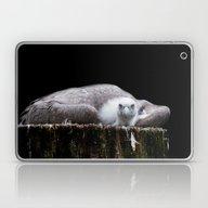 Young Griffon Vulture, G… Laptop & iPad Skin